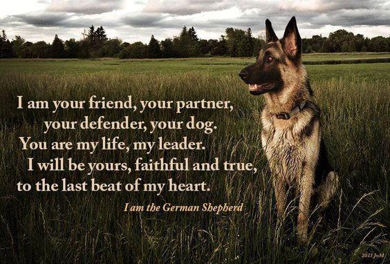 Shepherd Quote