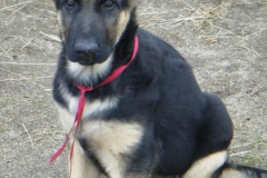 12-29-10 puppies 006